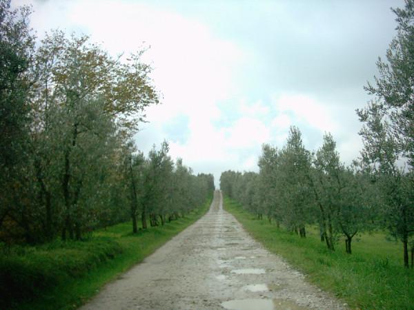 Strada privata quali sono i diritti di chi la usa sara for Strada privata